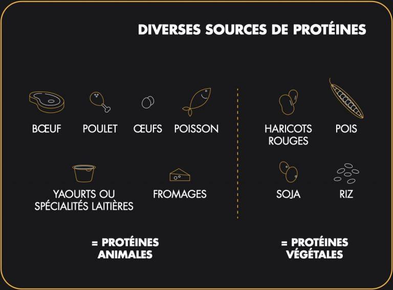 fr-proteines-visuel-01