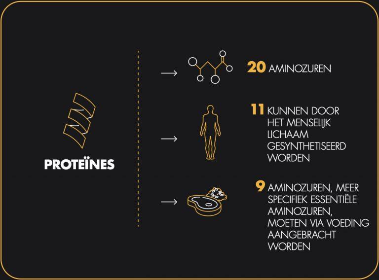 nl-proteines-visuel-03